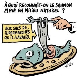 saumon en eaux troubles